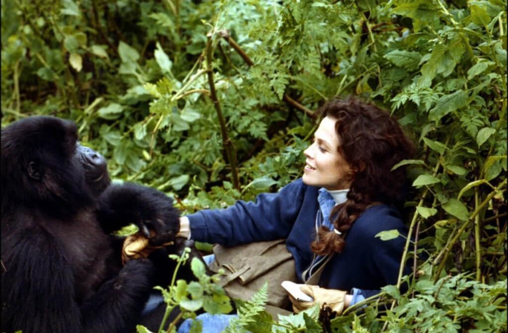 ruanda-gorilas-peliculas-libros-ratpanat