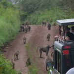 Safari-Black-Friday- kenia-tanzania-ratpanat